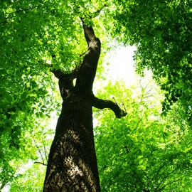 tree-pruners